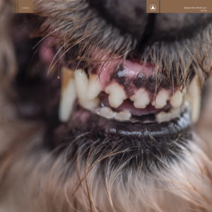 'World Eater' by Blanck Mass, album review by Josh Gabert-Doyon. The full-length comes out on March 3 via Sacred Bones.