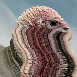Holy Fuck announces new EP 'Bird Brains',