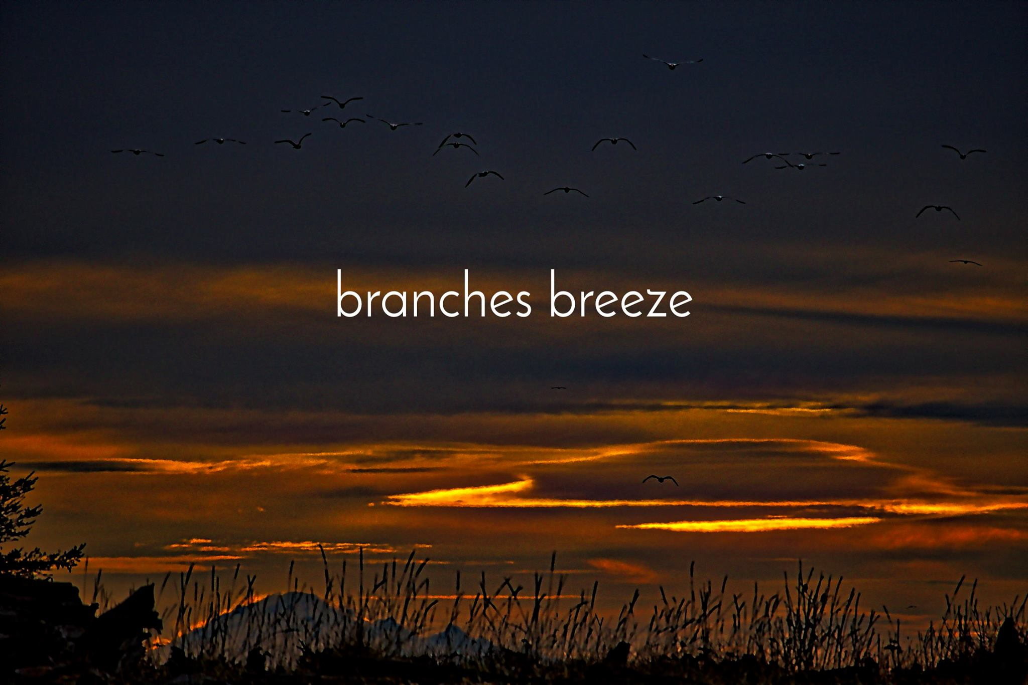 """branches breeze debut """"New Horizons"""""""