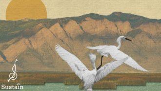 """Bear River Migratory Bird Refuge"" Conner Youngblood"