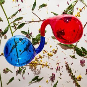 Dirty Projectors Lamp Lit Rose Review For Northern Transmissions