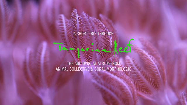 Animal Collective Share Extended Trailer for 'Tangerine Reef'.